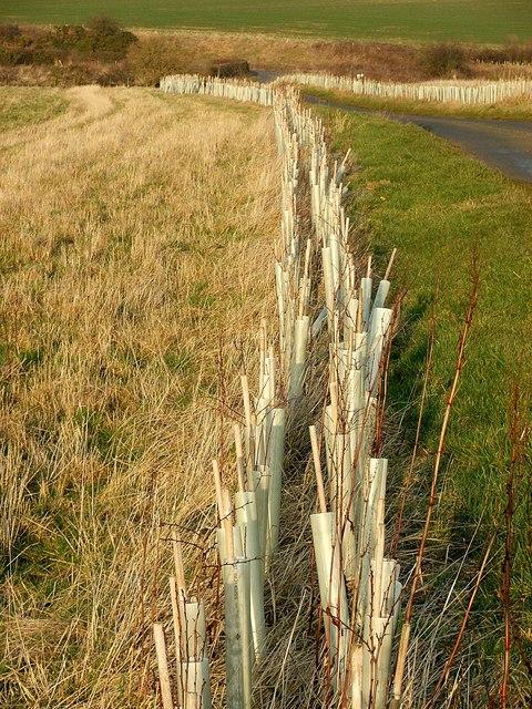 New Hedge
