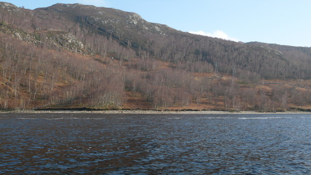 Birch on East shore of Loch Luichart