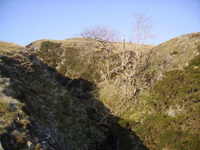 Ash Tree, Blea Gill
