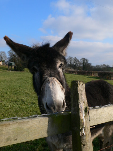 Nosey donkey