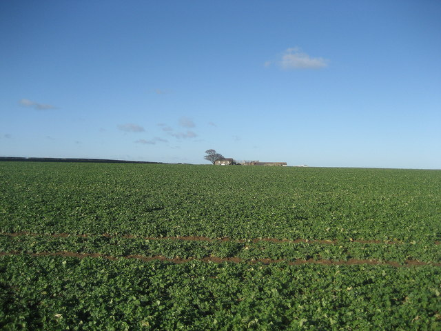 Field north of Embleton