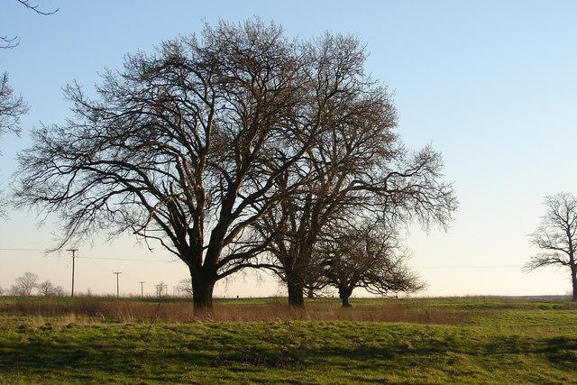 Three Trees at Threekingham