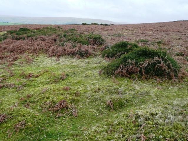 Moorland above Blaen-y-cwm