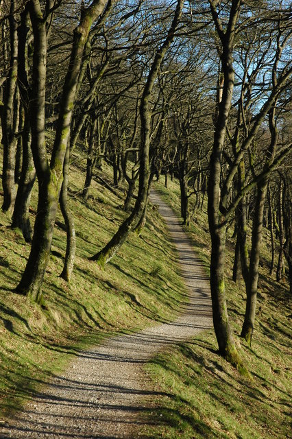 Path through Macclesfield Forest