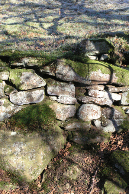Mossy embankment wall