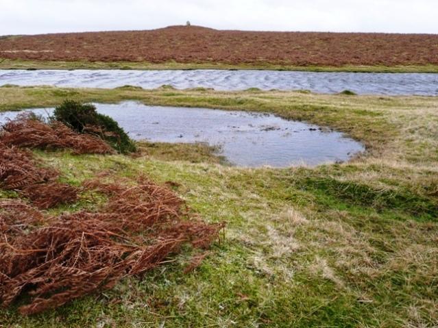 Moorland pool and tumulus