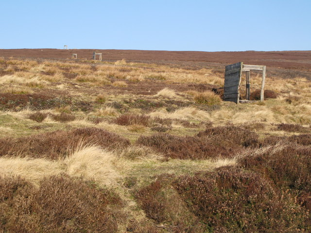 Line of grouse butts on Lilswood Moor