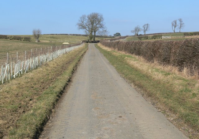 Country lane towards Burrough on the Hill