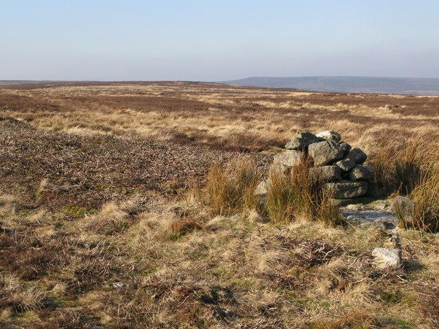 Currick on Riddlehamhope Fell