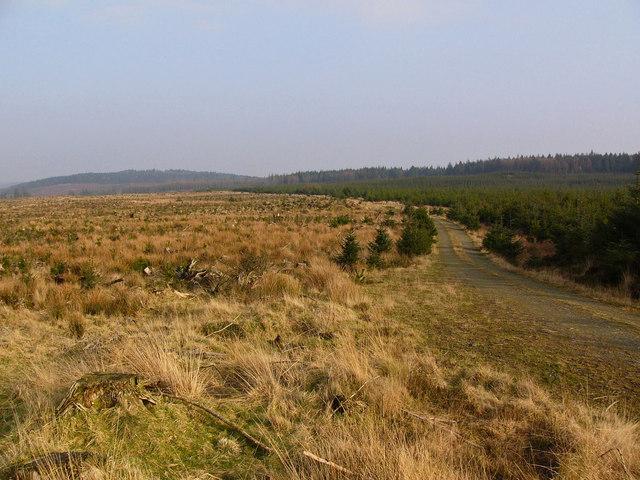 Forestry Road near Glenwhan Lochs