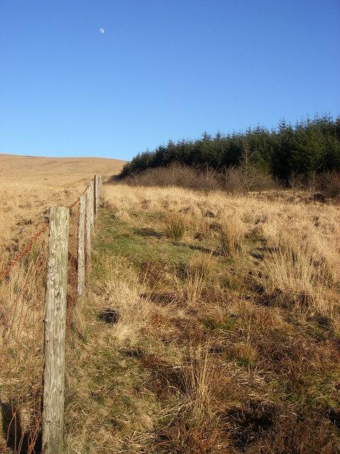 Woodland edge near Nant yr Wydd