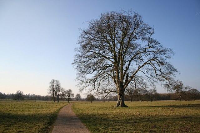 Scrivelsby parkland