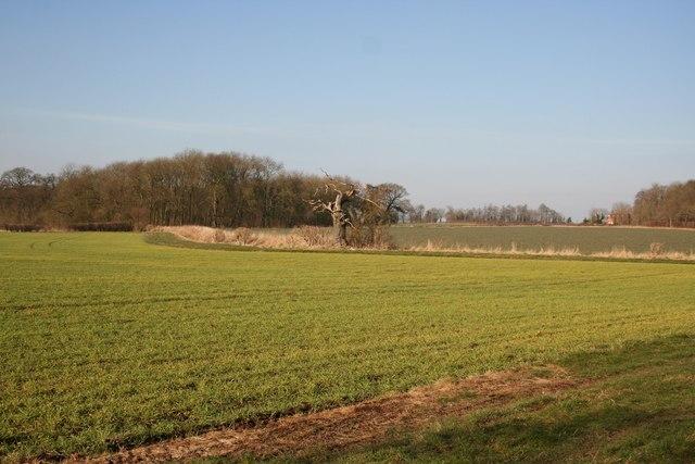 Scrivelsby Spinney