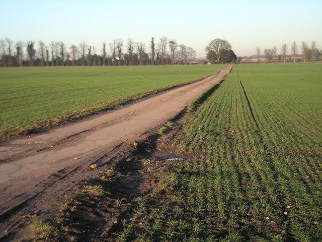 Monarch's Way near Ryton