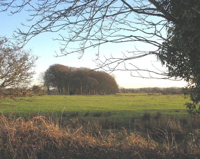 View across fields towards the tip of the shelter belt