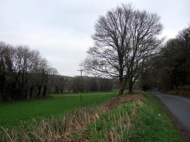 Syfynwy valley near Stepaside Bridge