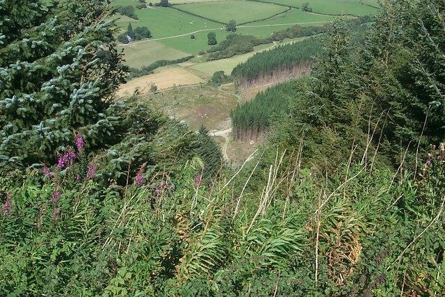 Radnor Forest - Bache Hill