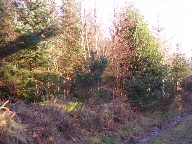 Self seeded trees in plantation
