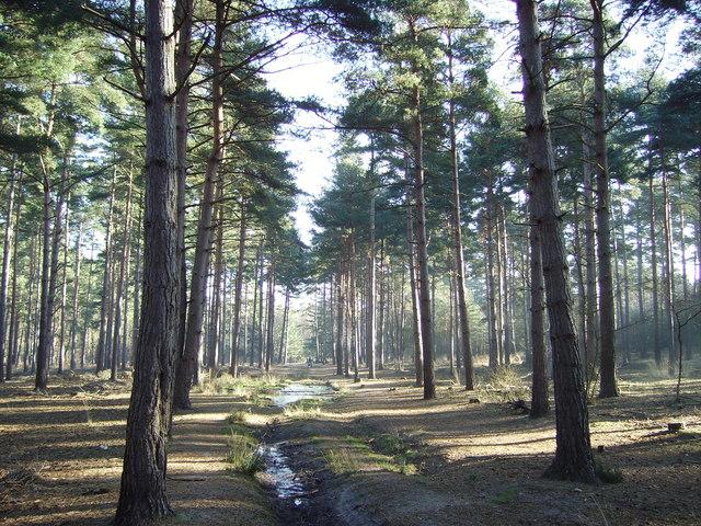Woodland near the Basingstoke Canal