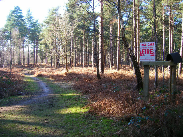 Broadwater Forest