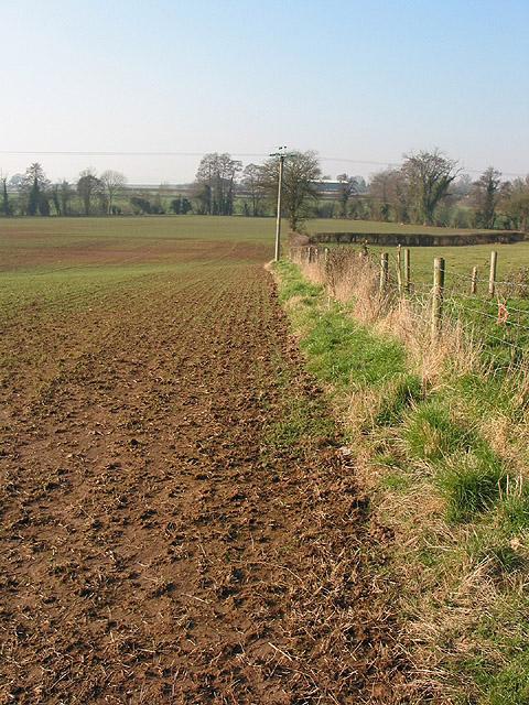 Arable field edge near Greenway Crossroads