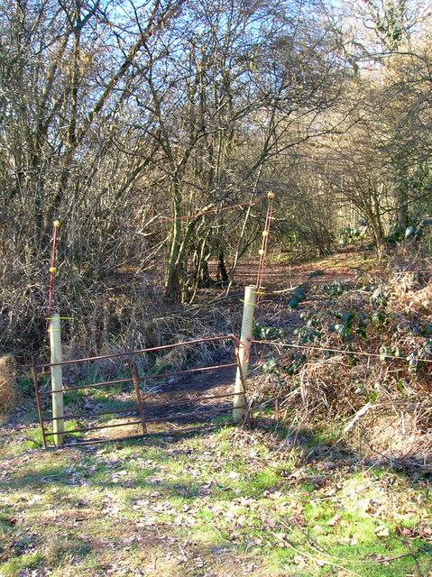 Entering Ramslye Wood