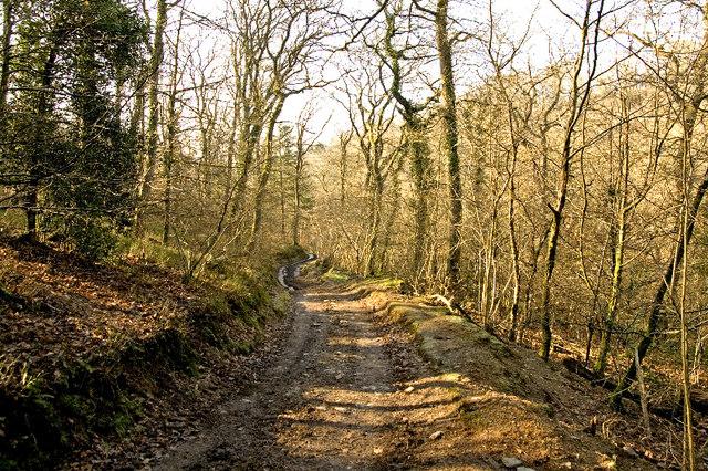 Bridleway, Skilgate Wood