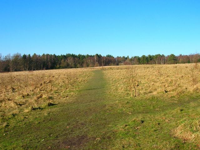 Montecute Field