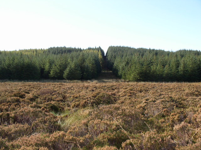 Forest near Dupin Hill