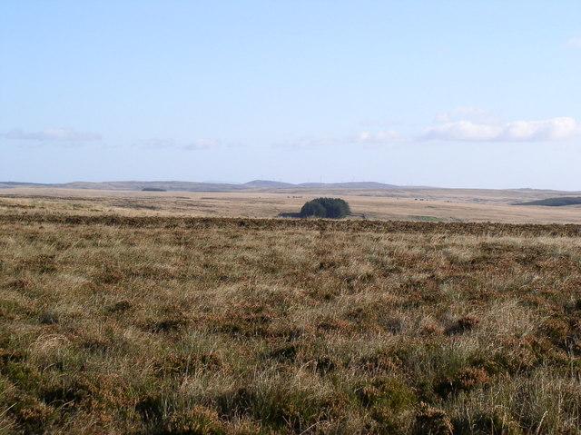 Moorland Wood