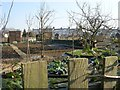 SE2337 : Allotments - off New Road Side by Betty Longbottom