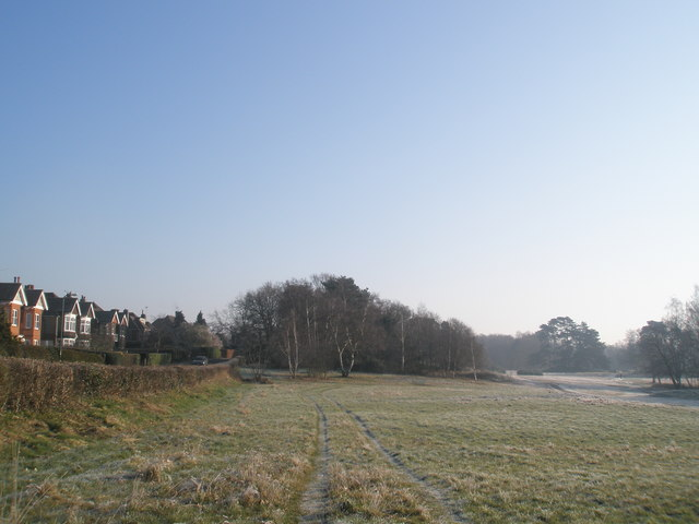 Looking east  along the hedge at The Heath