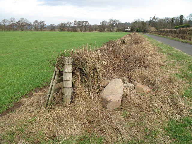 Hedge, Garvock