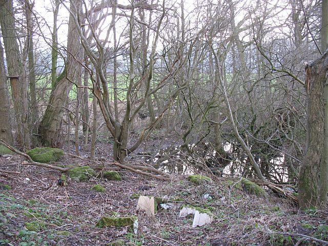 Wet woodland, White Moss Loch