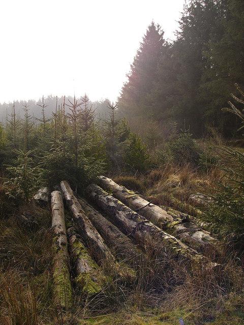 Cut timber
