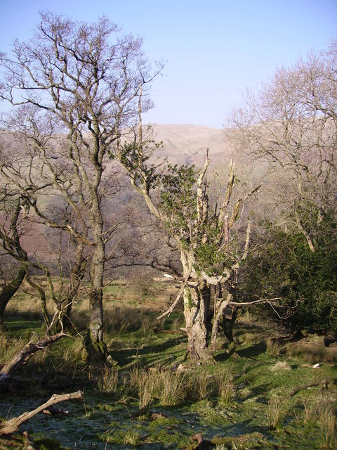 Borrowdale Wood