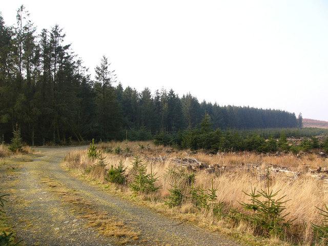 Forestry near Glenwhan Lochs