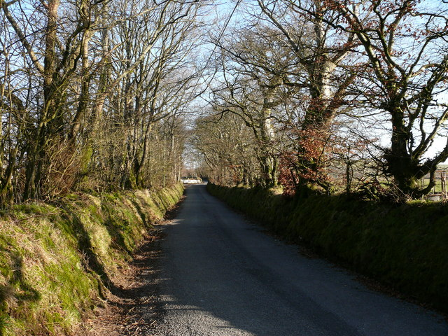 Lon Goediog / Wooded Lane