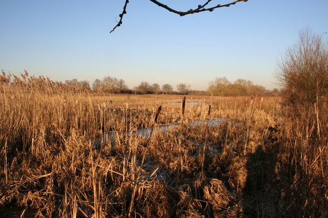 View of Cholsey Marsh towards Ferry Road