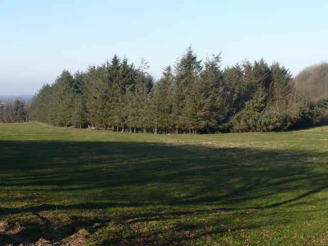 Fforest Coniferaidd Bach / Small Coniferous Plantation
