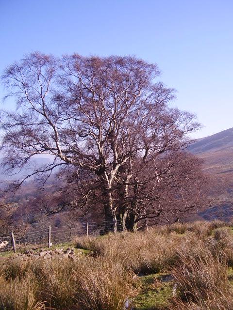 Field/moor boundary