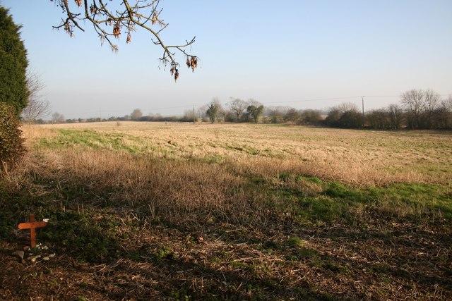 Timberland farmland