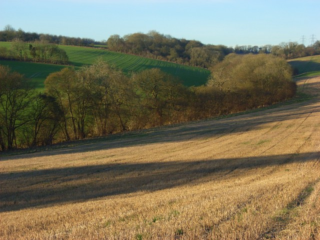 Shaw Bottom