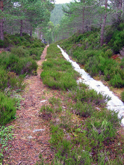 Forestry road in Glen Tanar National Nature Reserve