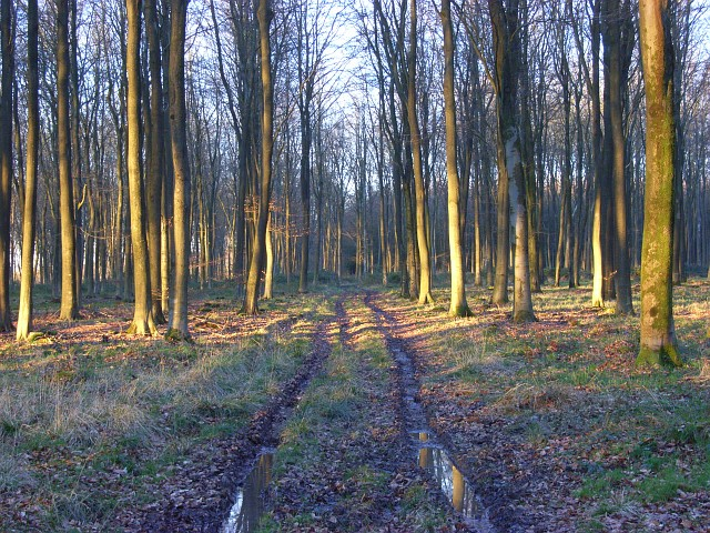 Collingbourne Woods