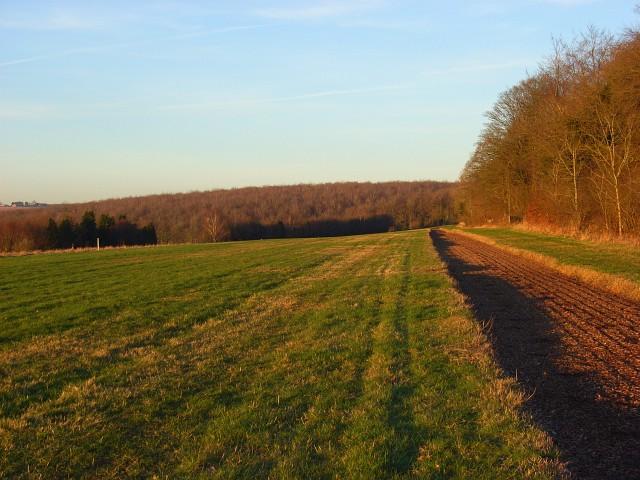 Gallop on Sunton Heath