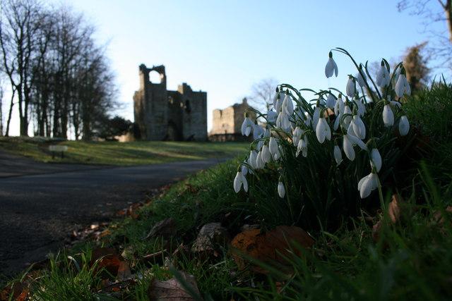 Snowdrops at Etal Castle