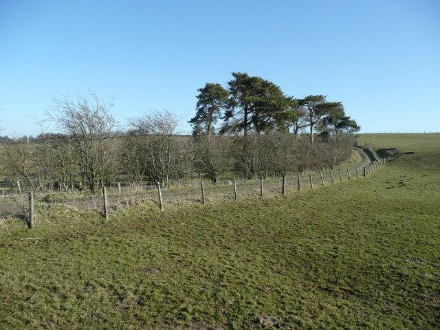 Bridleway on Pen-y-clawdd Hill