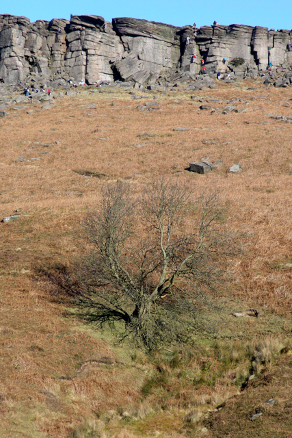 Tree on Hookcar Stitch
