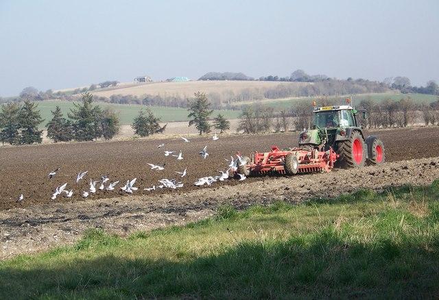 Following the plough, Stoke Farthing